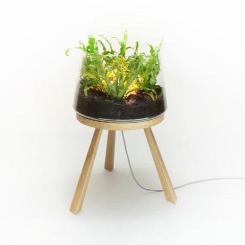 Barbara Manolo Planta Lamp