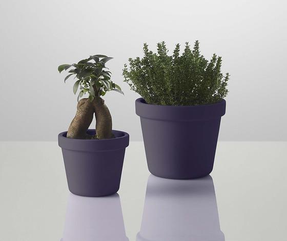 Thomas Bernstrand Outside In Flower Pot